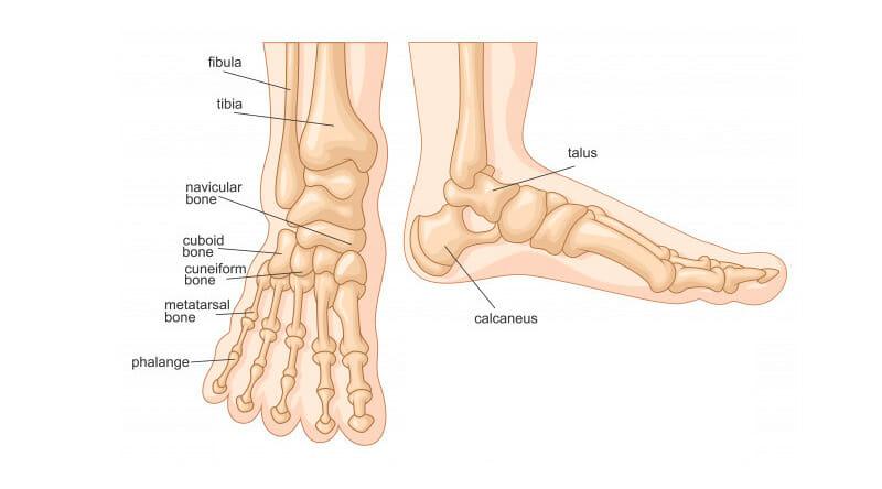 Esquerdo e do inchados peito lado dor no pés